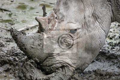 Nashorn wühlt im Schlamm