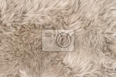 Fototapete Natural sheepskin rug background texture sheep fur