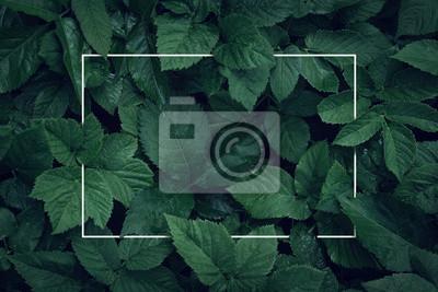 Fototapete Naturhintergrund, abstrakter weißer Rahmen in den Blättern mit Kopienraum
