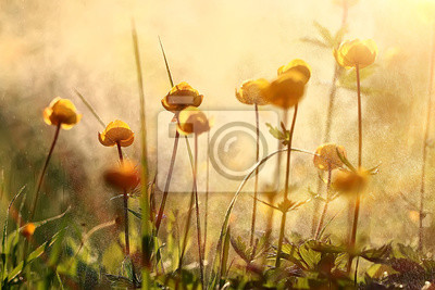 Fototapete Naturhintergrund blüht gelbes / schönes Frühlingsnaturfoto, abgetönte Weinlese blüht Design