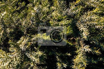 Weihnachtsbaum Natürlich.Natürliche Alte Weihnachtsbaum Holz Textur Muster Oder