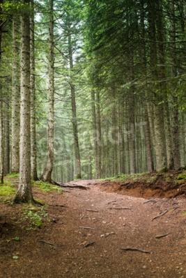 Fototapete Natürliche Fichte Baum Wald