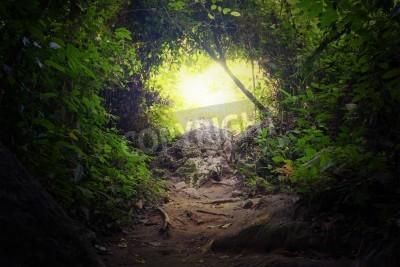 Fototapete Natürliche Tunnel in tropischen Dschungel Wald Straße Weg Weg durch üppige, Laub und Bäume von immergrünen dichten Regenwald Mysterious magischen Hintergrund