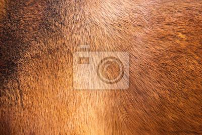 Fototapete Natürlichen Pelz Textur Hintergrund