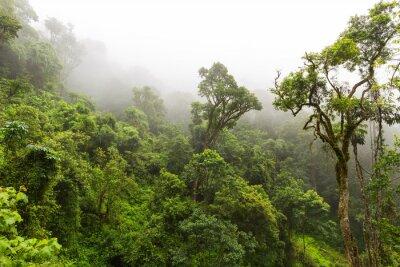 Fototapete Natürlicher Wald in Magoebaskloof