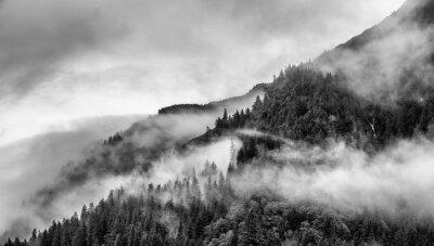 Fototapete Nebel am Berggipfel mit Kiefer