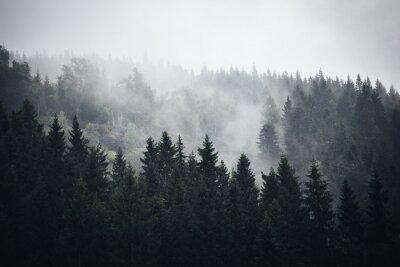 Fototapete Nebel im Norwegischen Wald