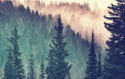 Fototapete Nebel im Wald