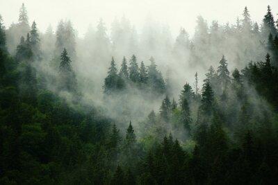 Fototapete Nebelhafte Landschaft mit Tannenwald in Hipster Vintage Retro-Stil