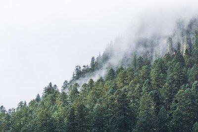 Fototapete Nebelig über den Wald am Abend.