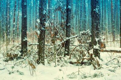 Fototapete Nebeligen Kiefernwald mit ersten Schnee bedeckt