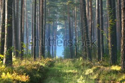 Fototapete Nebeliger Sonnenaufgang im Laubwald in Lettland.