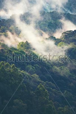 Fototapete Nebeliger Wald in tropischem