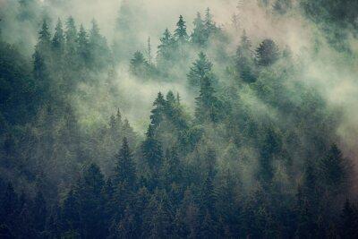 Fototapete Neblige Landschaft mit Tannenwald im Retro-Stil des Hipster-Vintagen