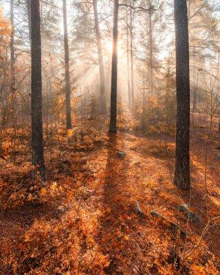 Fototapete Nebligen Morgensonne leichten Wald