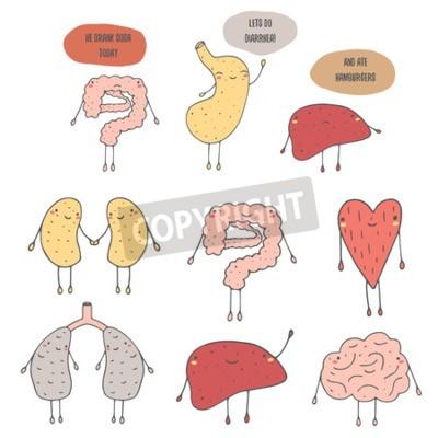Nette hand gezeichneten doodle interne menschliche organe ...