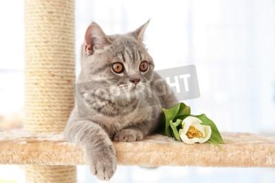Fototapete Nette Katze, die auf Klauenschärfer mit Tulpe im hellen Raum liegt