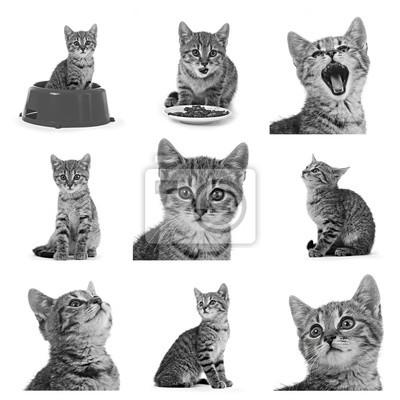 Neuf portraits artistiques chaton tigré noir et blanc