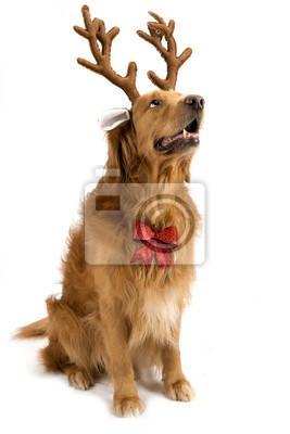 hirschgeweih für hunde