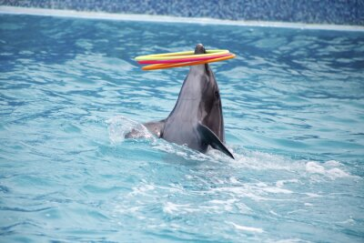 Fototapete Niedliche Delphine während einer Rede am Delphinarium