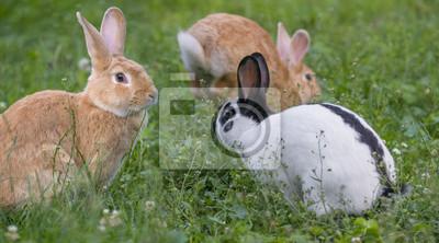 Fototapete Niedliche Kaninchen Im Garten Close Up