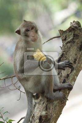 niedlichen Makaken auf Baum sitzt