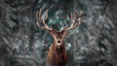 Fototapete Noble deer male in winter snow forest. Artistic winter christmas landscape.