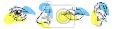Fototapete Nose, eye, lips, ear in pencil art style. Vector illustration design.
