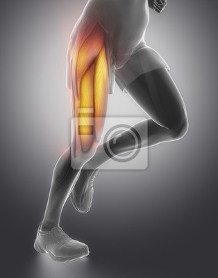 Oberschenkel mann muskelanatomie fototapete • fototapeten Achilles ...
