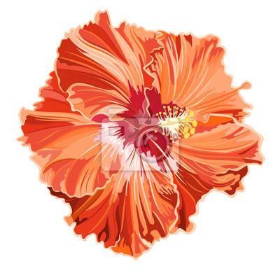 Orange hibiscus simple corrugated