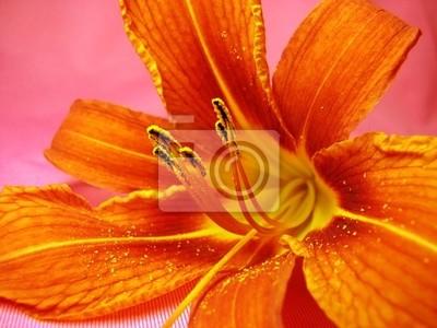 Fototapete orange Lilie
