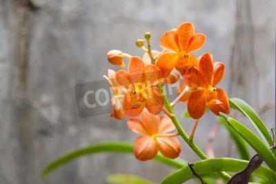 Fototapete Orange orchid flowers