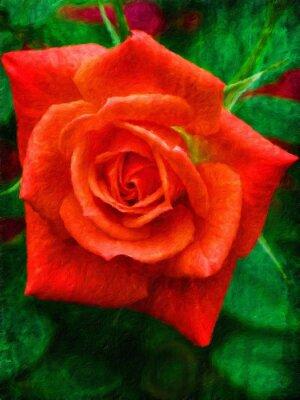 Orange Rose / Ölgemälde-Fotoeffekt