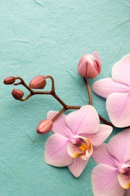 Fototapete Orchidee.
