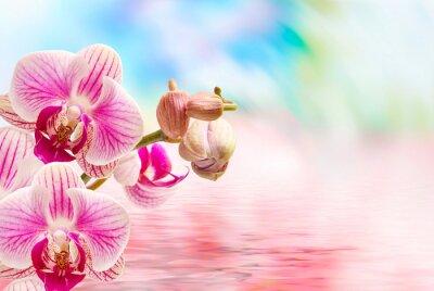 Fototapete Orchidee Blume Nahaufnahme