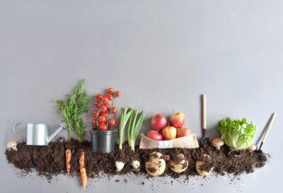 Fototapete Organischer Frucht- und Gemüsegartenhintergrund