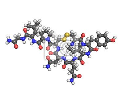 Oxytocin-Molekül auf weißem