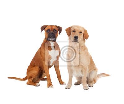 Fototapete Paar Erwachsene Hunde