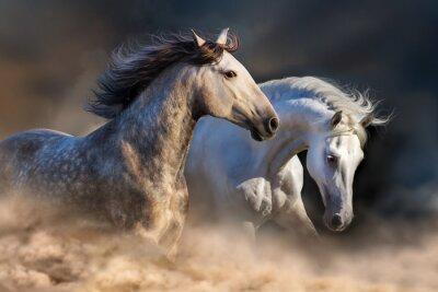 Fototapete Paar Pferd laufen in Staub bei Sonnenuntergang Licht