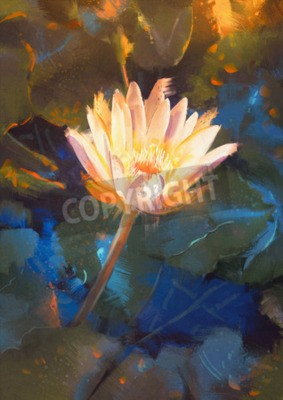 Fototapete painting of beatiful yellow lotus blossom,single waterlily flower blooming on pond