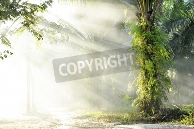 Fototapete Palm Fog Light Farm Tag im Freien