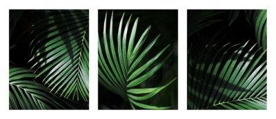 Fototapete Palm leaf. Tropical plants. Nature green color background.