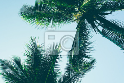Fototapete Palm Tree Leaf background White And Black Texture Silhouette, branch realistic tropical coconut leave isolated, beautiful summer nature wallpaper with sky