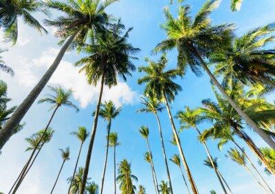 Fototapete Palm trees against blue sky