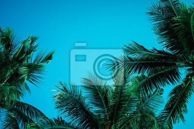 Fototapete Palme-Blatthintergrund Weißes und schwarzes Beschaffenheits-Schattenbild, realistischer tropischer Kokosnussurlaub der Niederlassung lokalisiert, schöne Sommernaturtapete mit Himmel