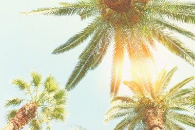 Fototapete Palme und Sonnenschein