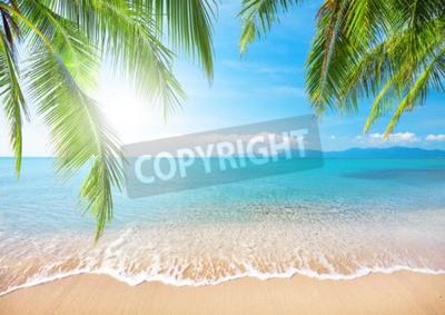 Fototapete Palme und tropischer Strand