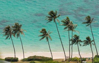 Fototapete Palmen am Strand von Waimanalo, Hawaii