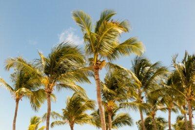 Fototapete Palmen auf dem Hintergrund eines schönen Sonnenlichtes