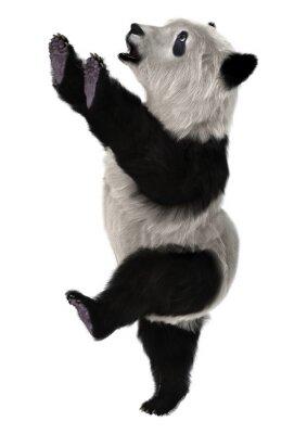 Fototapete Panda-Bärenjunges